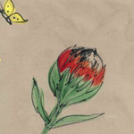 Proteas and Butterflies - 1146